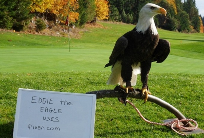 take a picture of my bald eagle, Eddie, with your message