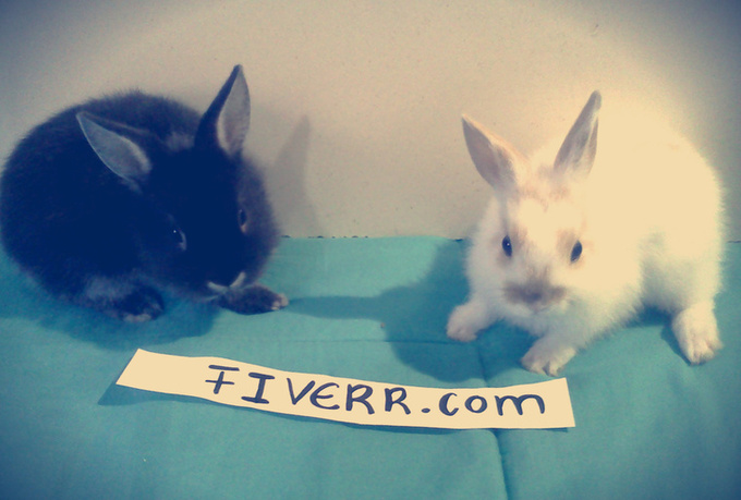 take pictures of my sweet bunnies with your message, logo or picture only