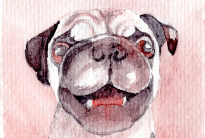 create a small painting of your Pug from your photo
