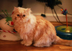 take a photo of my male persian cat with your message small3