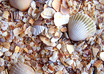 Seashell_on_the_beach