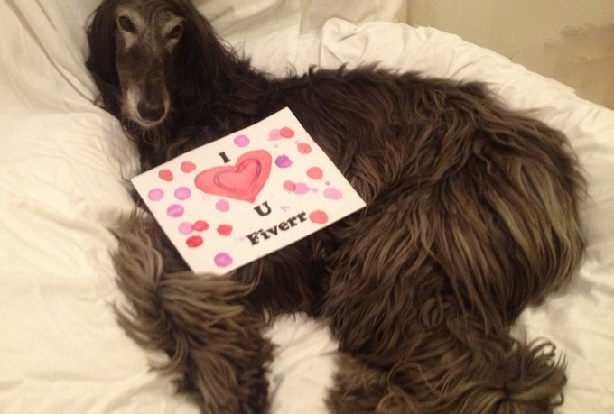 take a picture of my Afghan Hound Dog with your message