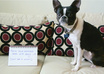 write your message in a photo with my cute Boston Terrier, Apple small1