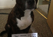 write a message next to my beautiful Staffordshire Bull Terrier