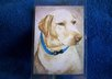 mail you 2 Yellow Labrador Retriever luggage tags small1