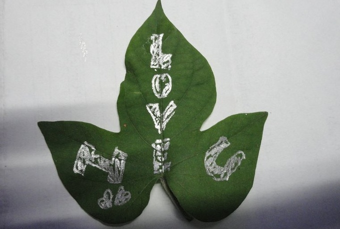 speed color your short message or a Logo Uniquely on a Plant Leaf and send you the HQ video